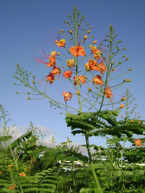 fleur 2 mini flamboyant location bungalow jardin tropical