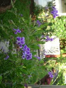 fleur 7 jardin tropical location bungalow guadeloupe
